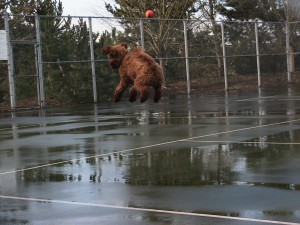 Red dogs can jump!