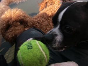 I mean a close eye on my ball!