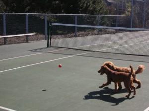 """""""Wait! Is that Rubin's ball?"""