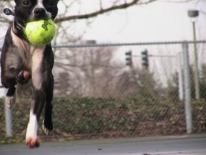 Fetch, it's all about fetch!