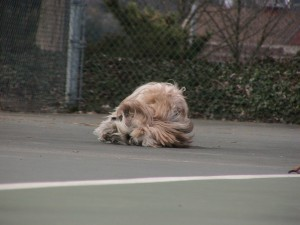 These courts feel so good when you roll on them