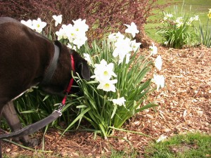 It's good to stop and smell the flowers!
