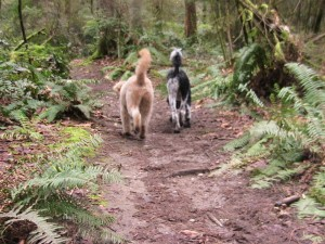 We walk together smelling along the trail. Harmless, right?