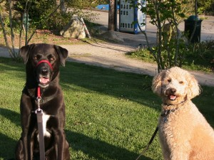 After agility class, Jasper and I headed to the park. We're smiling, too!
