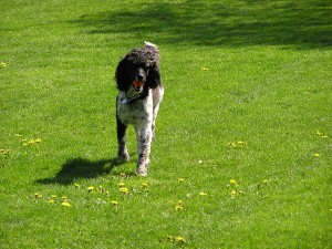 First came Monty and we played fetch in the park...