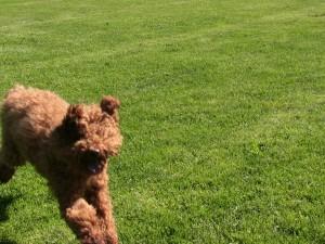 Ollie's ears2