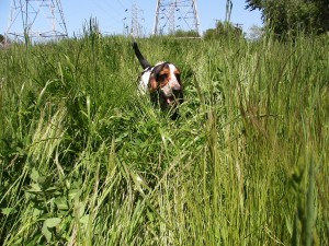 rufusgrass