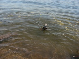 Don't worry, Monty, I'm a great swimmer only my mouth is too small to get the ball when it's in the water, darn it!