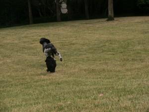 chasing Monty