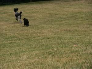 chasing Monty2