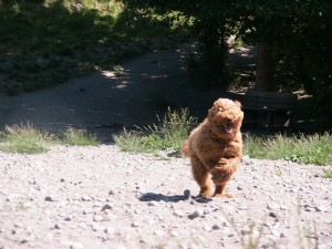 running Ollie