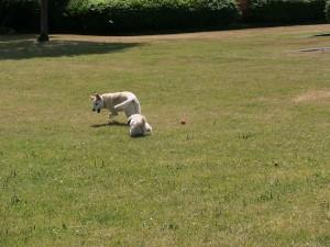 chasing2