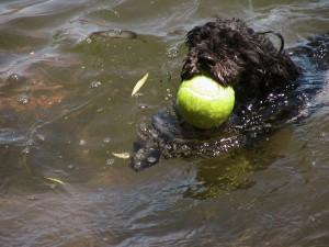 small dog, big ball