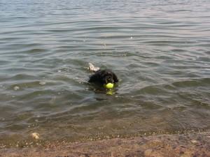 water fetch