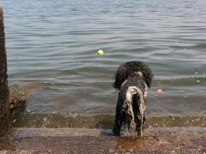 water fetch2