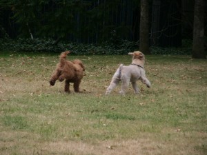 two playing