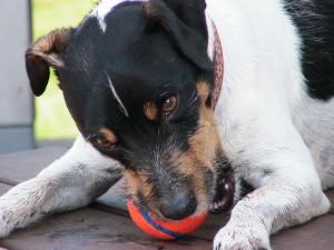 a new ball