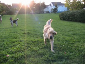 sun fetch