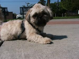 cute perrito