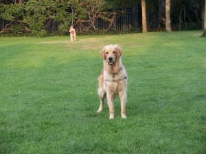 puppy wilson