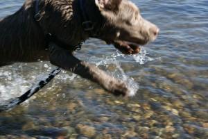 blurry dog