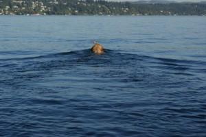 wilson swim
