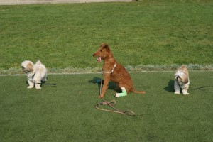 3 dogs and a cast