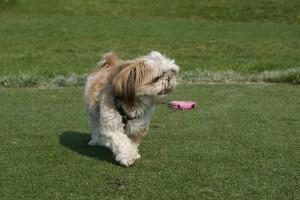 Oshi on the move