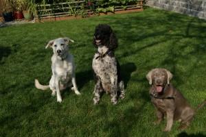 3 happy pups