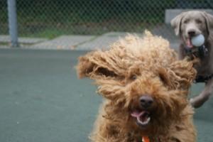 windy ollie