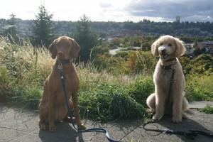 cloud dogs