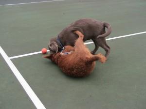 burst of play