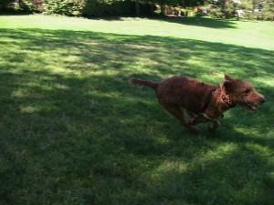 running Gemma