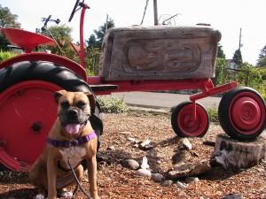 rosie tractor