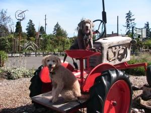 tractor shot
