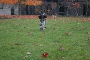Monty running