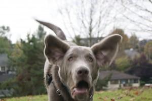 ear boy