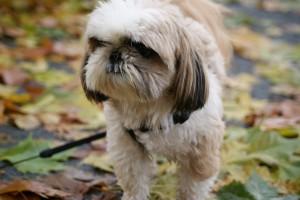 grounddog