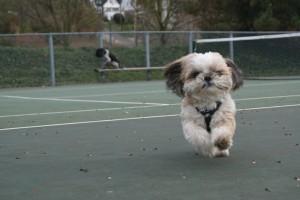 winddog