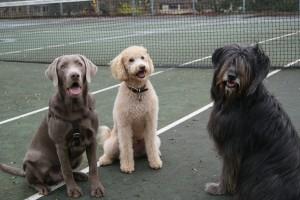 3moredogs