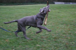 stickdog