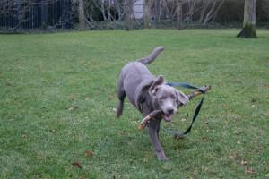 stickdog2