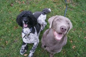 smilingdogs