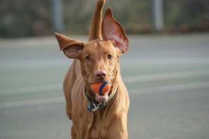 red ears