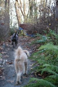new trail