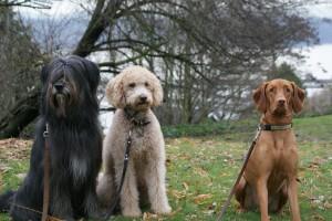 gooddogs