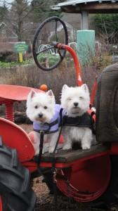 tractordogs