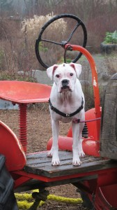 tractordog