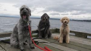 winddogs