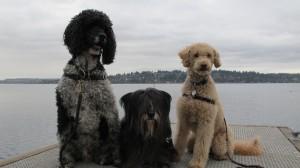 dockdogs